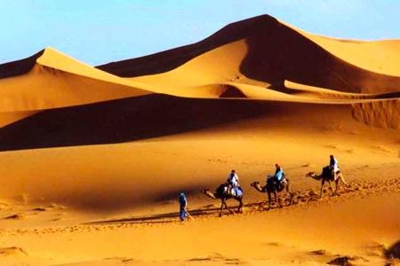 Sahara-Camel-Caravan