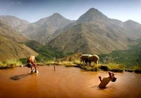 Berbers-In-Lake