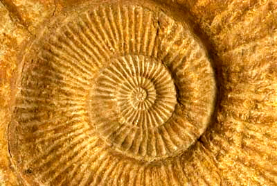 Fossils- Sahara- Desert