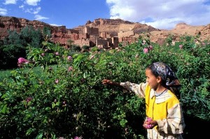 Valley of Roses Festival Morocco, Springtime