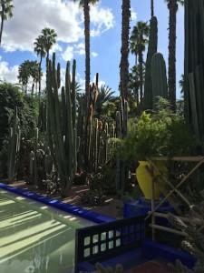Majorelle Gardens, Top 5 Things Marrakech