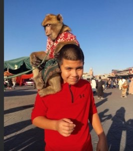 Morocco Family Vacation, Marrakech Monkeys, Photograph by Rusk Elatassi